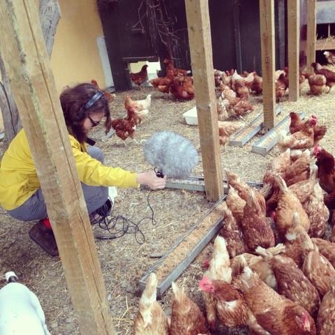El equipo de Efterklang grabando en la granja de pollos. Foto: Noma