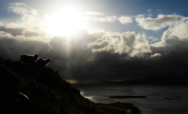 Ovejas sobre los acantilados de Streymoy. Foto: Jonathan Nackstrand/AFP/Getty Images
