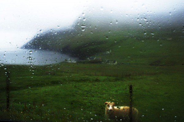 Oveja bajo la lluvia en la isla de Vidoy. Foto: Shaul Schwarz